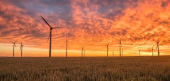 Wind Turbines in a wheat field at sunset