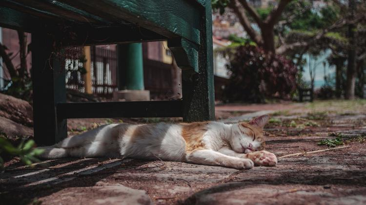 Cat taking a nap under a bench.